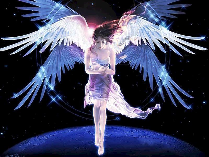 六翼天使鸽子血纹身内容图片分享